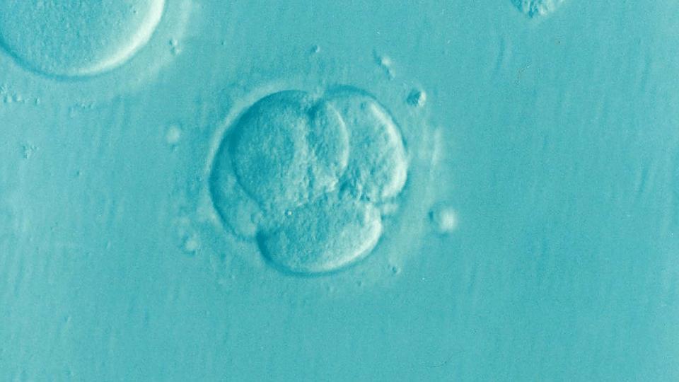 embarazo semana 3
