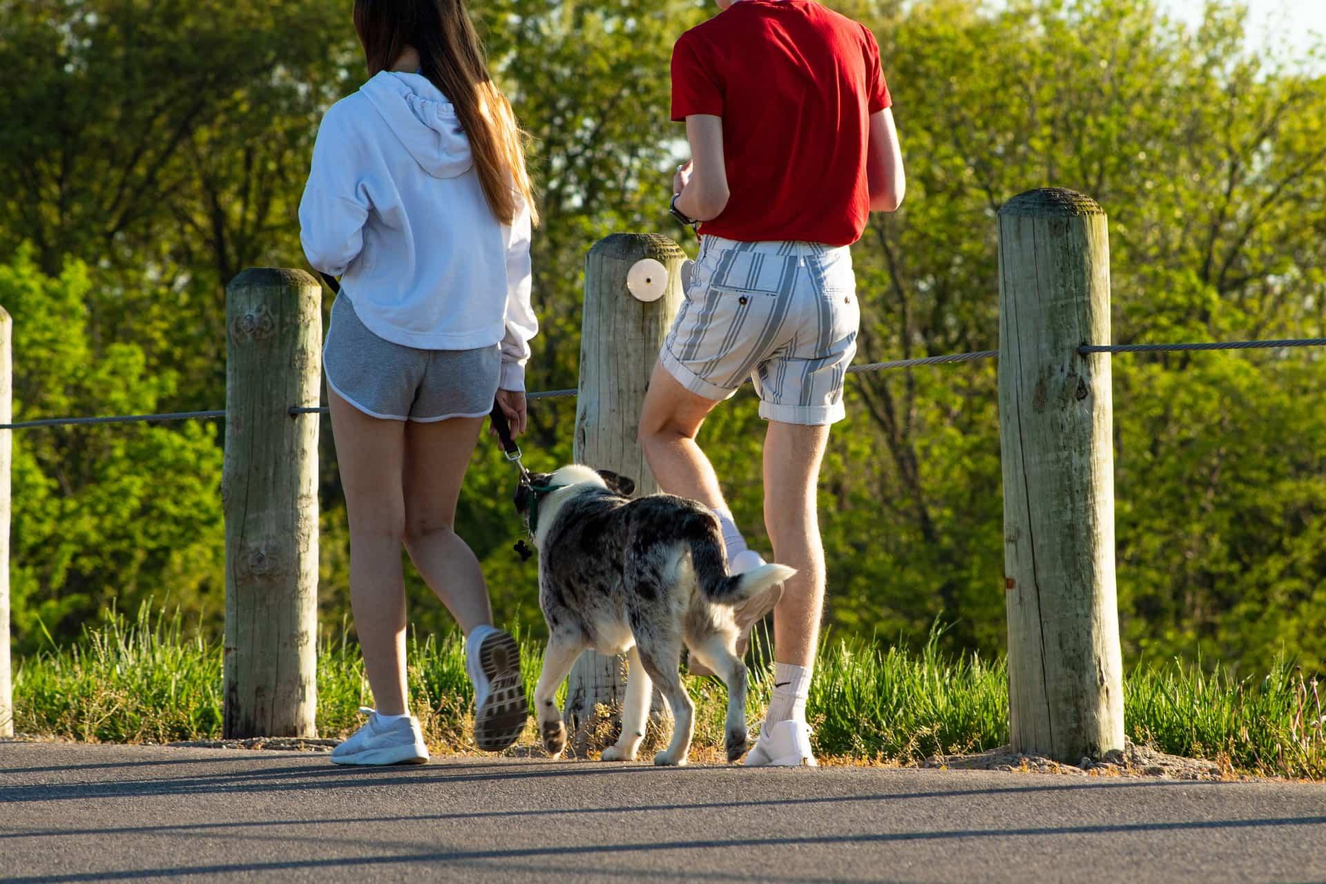 pasear mascota